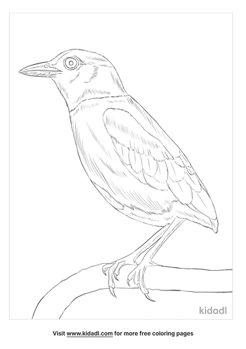 hooded-pitta-coloring-page
