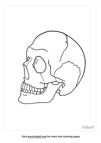 human skull drawing-1-lg.png