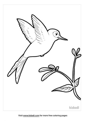 hummingbird coloring page_2_lg.png