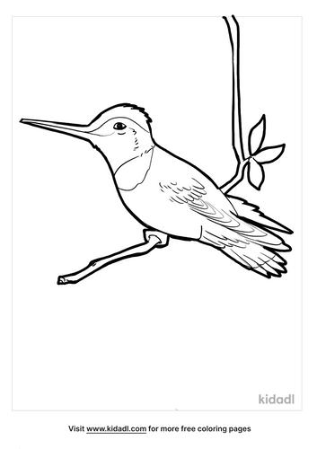 hummingbird coloring page_3_lg.png