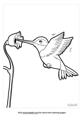 hummingbird coloring page_4_lg.png