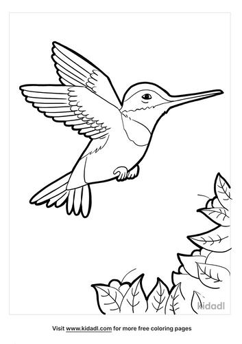 hummingbird coloring page_5_lg.png