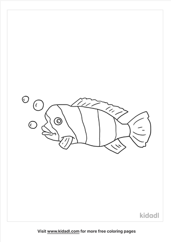 humphead-parrot-fish-coloring-page.png