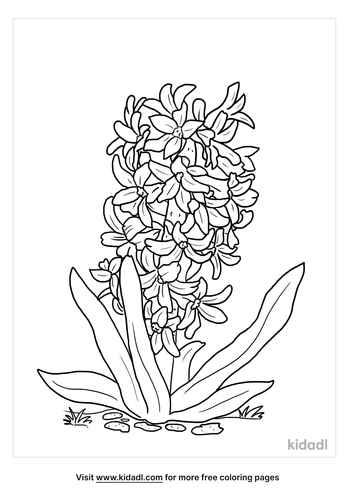 hyacinth flower coloring page-lg.png