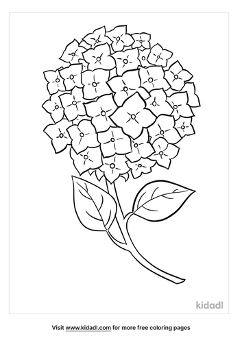 hydrangea-coloring-page.png