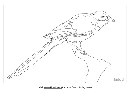 iberian-magpie-coloring-page
