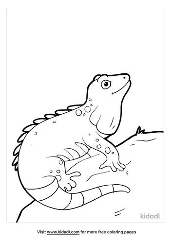 iguana coloring page_3_lg.png