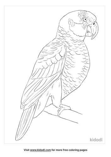 imperial-amazon-coloring-page