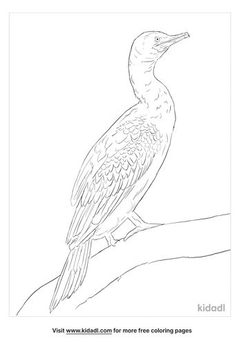 indian-cormorant-coloring-page