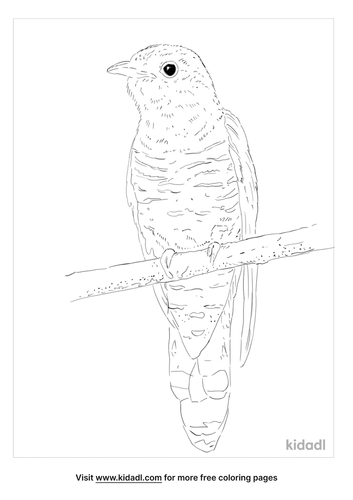 indian-cuckoo-coloring-page