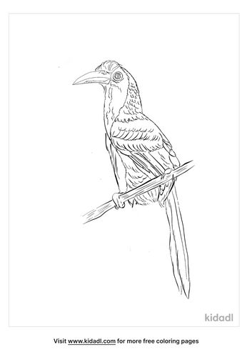 indian-grey-hornbill-coloring-page
