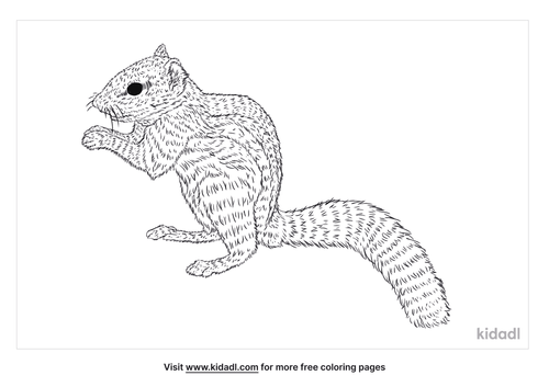 indian-palm-squirrel-coloring-page
