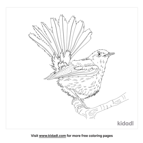 indian-robin-coloring-page