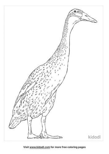indian-runner-duck-coloring-page
