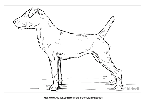 jagdterrier-coloring-page