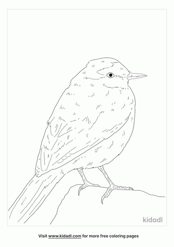 japanese-wagtail-coloring-page