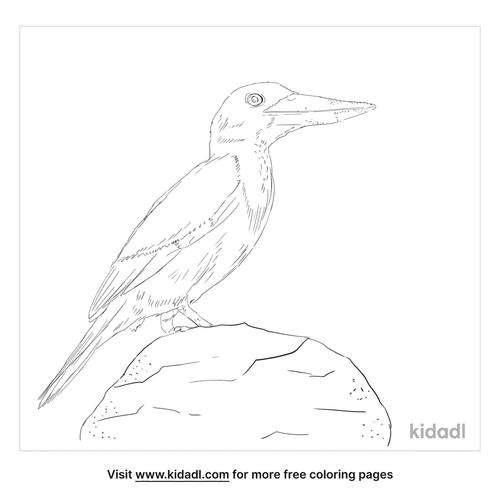 javan-kingfisher-coloring-page