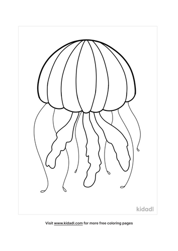 jellyfish drawing-4-lg.png