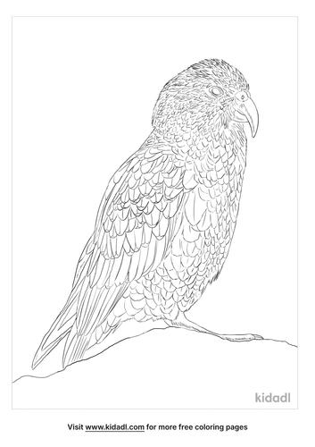 kea-parrot-coloring-page