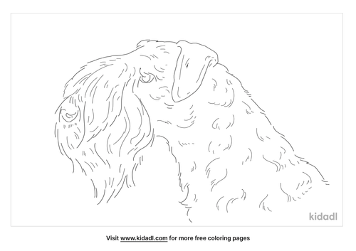 kerry-blue-terrier-coloring-page