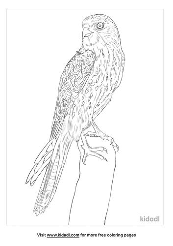 kestrel-bird-coloring-page
