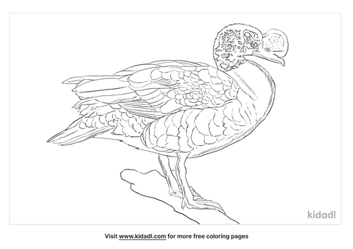 knob-billed-duck-coloring-page