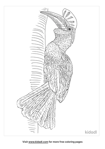 knobbed-hornbill-coloring-page