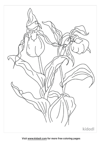 lady-slipper-coloring-page.png