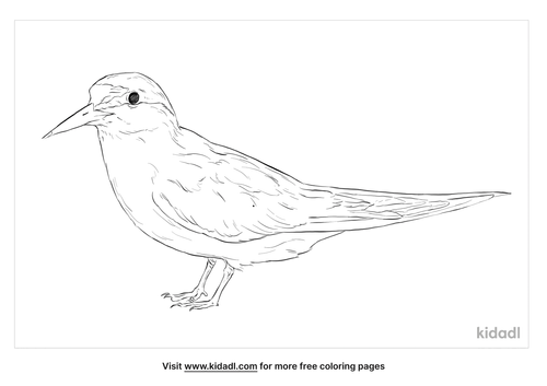 least-tern-coloring-page