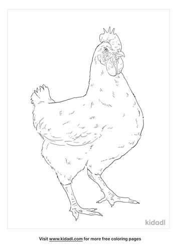 leghorn-chicken-coloring-page