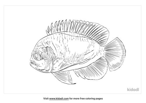 lemonpeel-angelfish-coloring-page