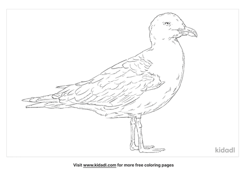 lesser-black-backed-gull-coloring-page