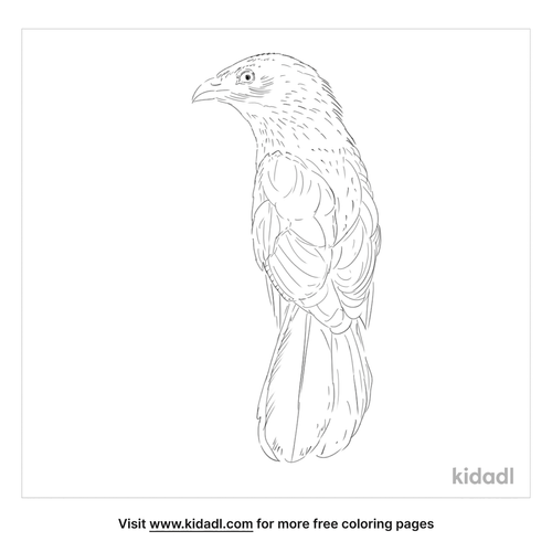 lesser-coucal-coloring-page