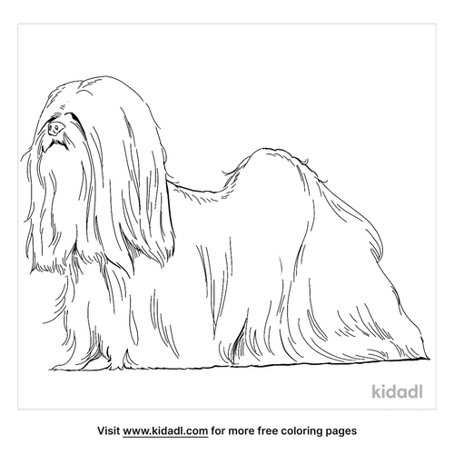 lhasa-apso-coloring-page