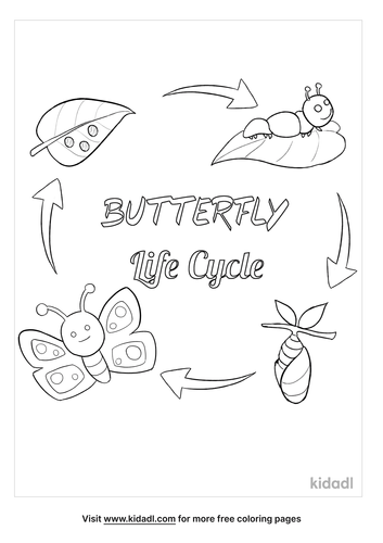 life-cycle-of-a-butterfly-coloring-page.png