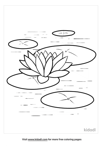 lilypad pictures-3-lg.png