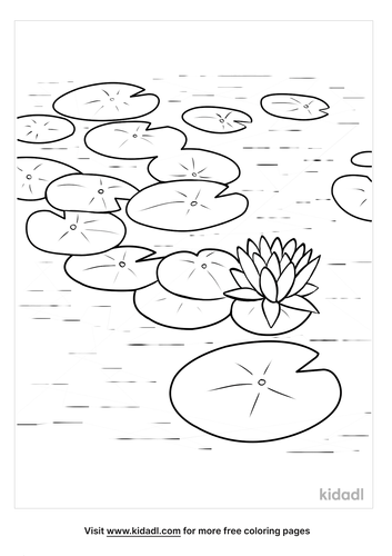 lilypad pictures-4-lg.png