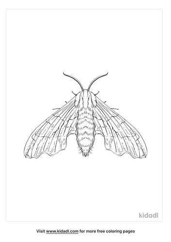 lime-hawk-moth-coloring-page