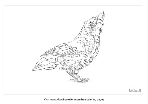 little-corella-coloring-page