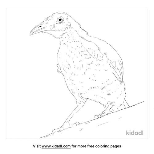 little-friarbird-coloring-page