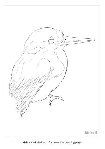 little-kingfisher-coloring-page