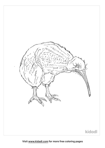 little-spotted-kiwi-coloring-page