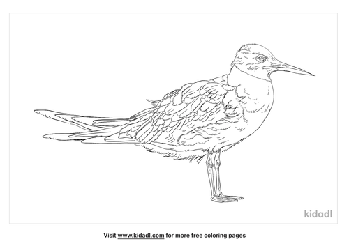 little-tern-coloring-page