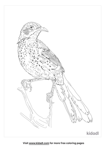 long-billed-thrasher-coloring-page