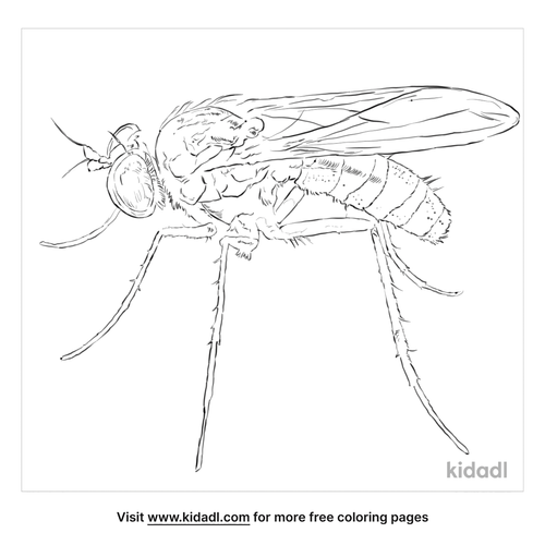 long-legged-fly-coloring-page