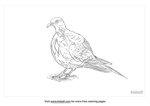 luzon-bleeding-heart-coloring-page