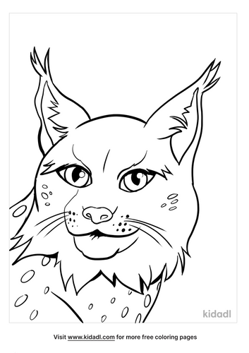 lynx picture-3-lg.png