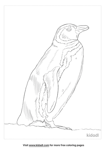 magellanic-penguin-coloring-page