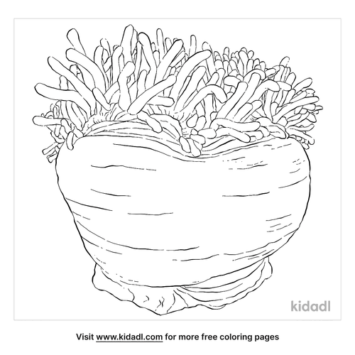 magnificent-sea-anemone-coloring-page