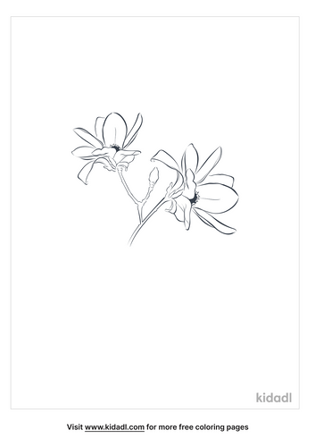 magnolia-coloring-page-5.png